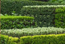 Seasonal Pruning