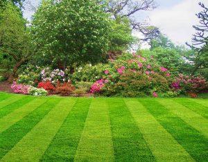 Lawn Care Bethesda VA