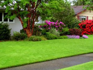 Lawn Care Herndon VA