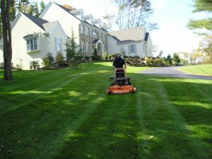 Lawn Care Reston VA