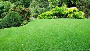 Lawn Treatments Fairfax VA
