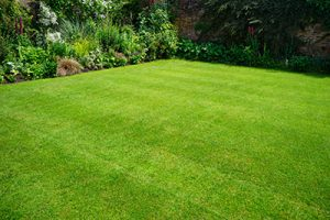 Lawn Treatments Potomac MD