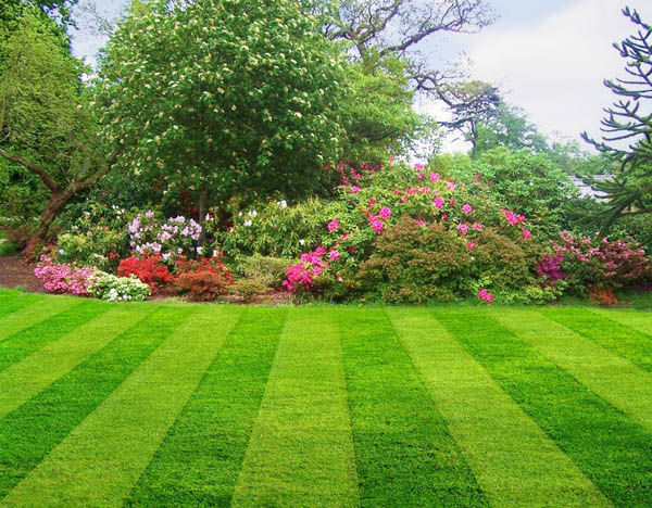 Lawn Care Bethesda Md Green Hill Landscaping